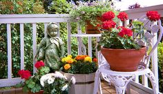 Balcony Gardening: A Beginner's Guide