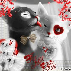 Beautiful Love Pictures, Beautiful Cats, Animals Beautiful, Good Morning Image Quotes, Good Morning Gif, A Cat Named Bob, Happy Friday Gif, Coeur Gif, Exotic Cats