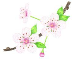 Cherry blossoms - how to draw, step by step .- Flori de cires – cum se deseneaza, pas cu pas Cherry blossoms – how to draw, step by step - Bunch Of Flowers Drawing, Lilly Flower, Step By Step Drawing, Abstract Flowers, Learn To Draw, Blue Flowers, Cherry Blossoms, Drawings, Textile