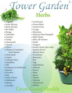Herbs you can grow in your Tower Garden