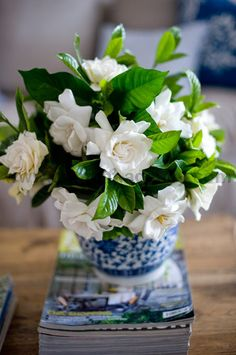 In the family or dining room or floating in a bowl ....  gardenias.   Florida favorite blooming now.
