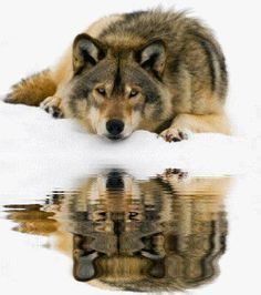 Reflections in the snow