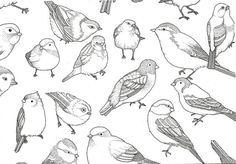 """bird """"doodles""""....pretty awesome drawings!"""