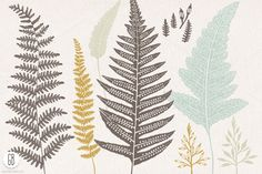 Fern, botanical vector graphics - Illustrations - 1