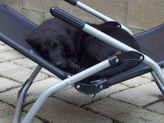 Droomvakantie voor de hond