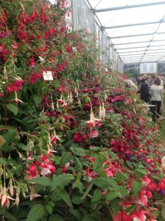 RHS Chelsea Flower Show 2014