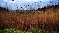 Svensk Skog. Photo by NaturPenna.