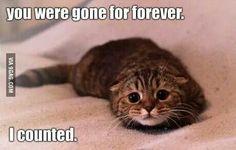 I.just love cats