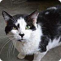 Adopt A Pet Bubba Greensboro Nc Kitten Adoption Dog Adoption Kittens