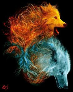 Wolves Howling in the Night