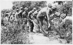 Spain - 1937. - GC - Album of 15th International Brigade in Preparation for…