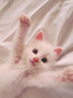 Kitten TV