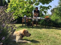 Free Time, Behind The Scenes, Labrador Retriever, Dogs, Animals, Labrador Retrievers, Animales, Time Out, Animaux