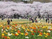 Tokyo Travel: Parks and Gardens of Tokyo - Showa Memorial Park