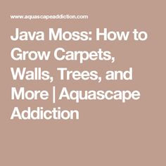 Java Moss: How to Grow Carpets, Walls, Trees, and More | Aquascape Addiction