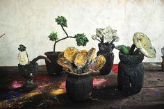 copa,girasoles,bonsai,blancas y cala | Flickr - Photo Sharing!