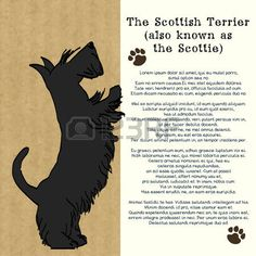 funny dog: Brochure design with sketch of a sweet standing Scottish terrier…
