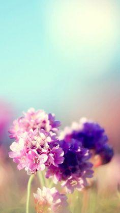 Campo de flores Natureza 5s ensolarado iPhone papel de parede