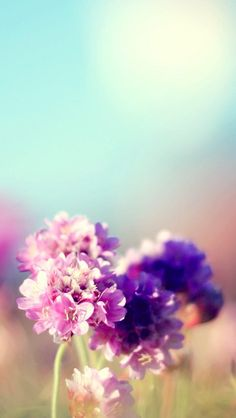 Flowers Field Nature Sunny #iPhone #5s #Wallpaper