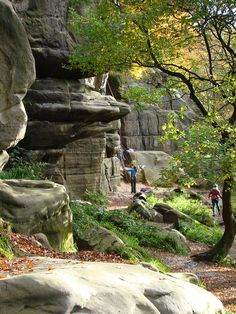 I'd like to take up climbing again and where better to start than Harrisons Rocks?- 381 climbs apparently! Ah~ childhood memories ;)