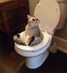 Looking at this cat's face/it getting stuck in the toilet cheers me up everyday