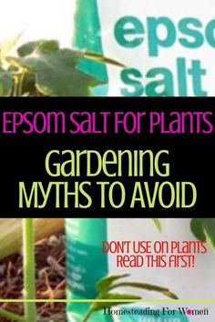 Epsom Salt For Plants -Gardening Myths To Avoid Now
