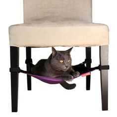 Cat Crib Purple, $26, now featured on Fab. For under one of the chairs - I think Greebo would love something like this.