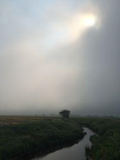 Fundy Fog. July 11, 2015. iPhone