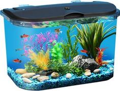 Imagitarium freshwater aquarium 5 2 gallons petco store for Cheap 5 gallon fish tank