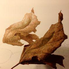 «#leaves #feuilles #autumn #automne #watercolor #watercolour #botanical #botanique #botanicals #botanicalillustration #instagram #artshow #art_spotlight…»