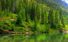 pine-tree-forest-lake-wallpaper-6530.jpg (2560×1600)