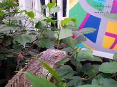 Contemporary art by felix heinrich @ garten der schmetterlinge schloss sayn ....best pic ever Art Intervention, Architecture Art, Dinosaur Stuffed Animal, Germany, Projects, Animals, Log Projects, Animales, Animaux
