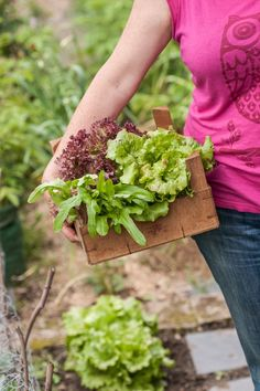 rund ums Jahr Salat ernten