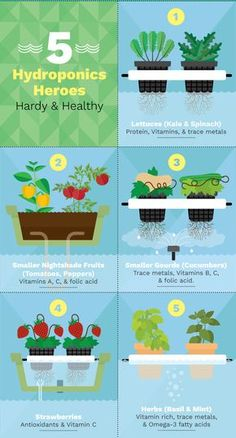 Hydroponics is a form of agriculture where plant roots grow, not in soil, but in nutrient-enriched water. It's a great method for growing food indoors and in small spaces. With the addition of automatic controls, it can be nearly maintenance-free.