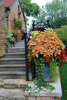 stone and wood staircase ~ prettier with container garden