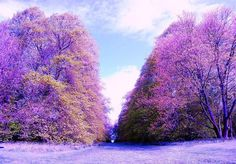 Divide - 5x7 Fine Art Scotland Park Trees Photography Print via Yen