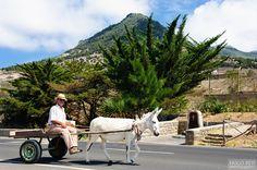 Porto Santo Island is a Portuguese island 43 kilometres northeast of Madeira Island in the North Atlantic Ocean Funchal, Portugal, Atlantic Ocean, Portuguese, Places, Islands, Photography, Travel, Traditional