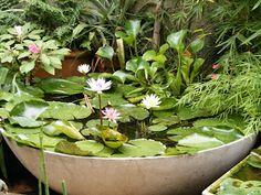 mini estanques en macetas