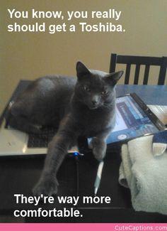 Laptop Advice | Cute Captions