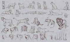 Lion poses/headshots/paws reference sketches by DarthMischee.deviantart.com on @deviantART