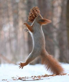 """""""Joy Is The Simplest Form of Gratitude"""" - Karl Barth #Nature #Photography #Squirrel"""