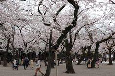 Yasukuni Shrine (Čijoda, Japonsko) - Recenze - Tripadvisor Yasukuni Shrine, Jakarta, Temples, Mumbai, Trip Advisor, Sidewalk, Street View, Bombay Cat, Side Walkway