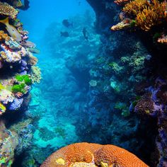 Scuba diving @ #greatbarrierreef #scuba #water #nature #fish #coral #holiday #adventure #explorer #wetsuit #padi #yacht #boat #liveaboard #australia #qld #cairns #firsttimescubadiving #newworld #newdoors by peaceanprosperity http://ift.tt/1UokkV2