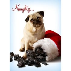Uh oh... no bones for naughty pup... *giggle*    So, did yours make the naughty or nice list this year...