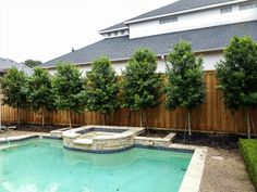 Privacy Screens - Landscape Designs & Pictures - Dallas, TX - Treeland Nursery View our privacy screen pictures and landscape designs of trees that we have planted throughout the Dallas Ft. Backyard Privacy Screen, Privacy Fence Landscaping, Landscaping Around Pool, Privacy Trees, Privacy Plants, Outdoor Privacy, Modern Landscaping, Outdoor Landscaping, Gardens