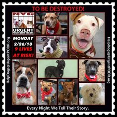 TO BE DESTROYED 02/26/18 - - Info     https://newhope.shelterbuddy.com/Animal/List   To rescue a Death Row Dog, Please read this:http://information.urgentpodr.org/adoption-info-and-list-of-rescues/ List of NH Rescues: http://www.nycacc.org/get-involved/new-hope/nhpartners To view the full album, please click ...-  Click for info & Current Status: http://nycdogs.urgentpodr.org/to-be-destroyed-4915/