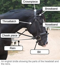 English bridle showing the parts of the headstall and the reins. Saddle up, it's #TimetoRide !