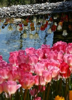 En güzel dekorasyon paylaşımları için Kadinika.com #kadinika #dekorasyon #decoration #woman #women ISTANBUL TURKEY - MARCH 31: A view of a tulip garden in Istanbul Turkey on March 31 2016. Every April different kinds of tulips are planted in Istanbul's parks avenues traffic roundabouts and open ground during the tulip season in Istanbul. Tulips b