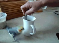 ETHER THIS BIRD IS JUST HYPER, OR HE SOMEHOW GOT INTO SOME COFFEE...