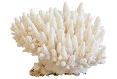 Finger Coral Specimen